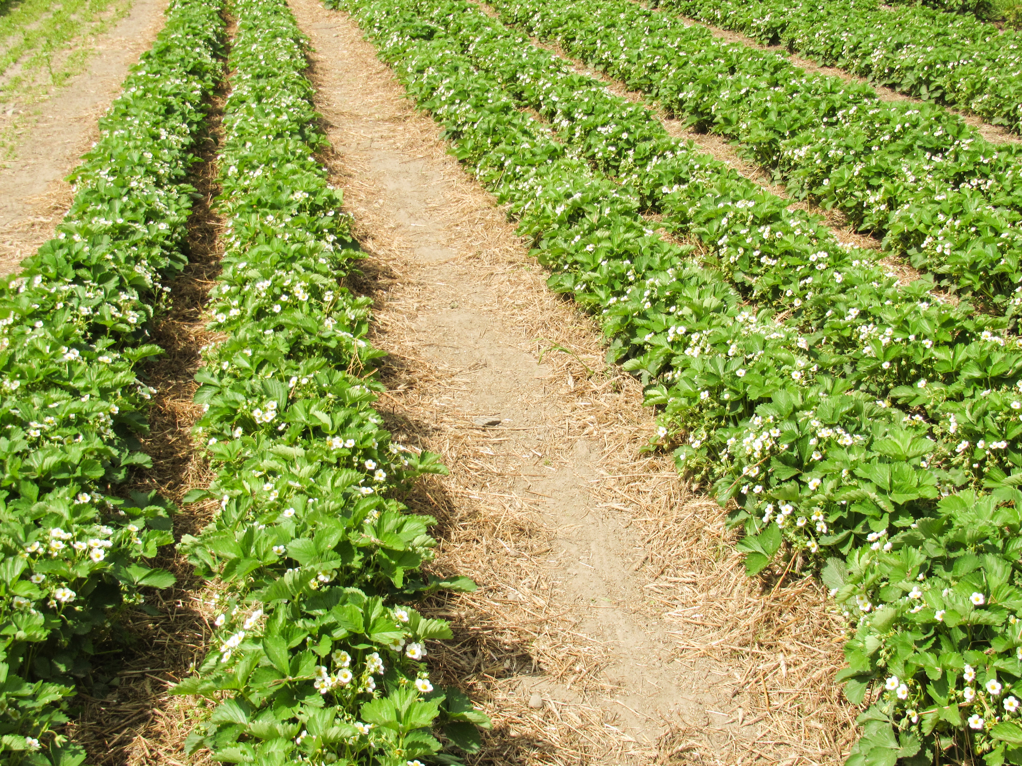 Garden free images.com